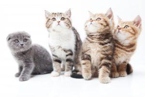 沢山の猫たち