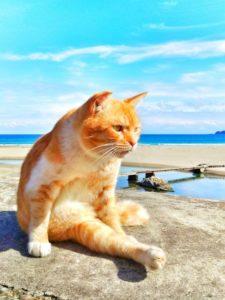 海辺でたたずむ猫