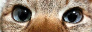 猫の目は邪視ではない。