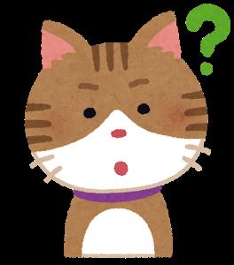 猫ちゃんの疑問