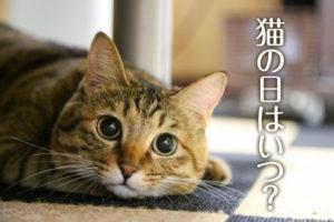 猫の日はいつ?
