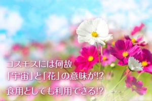 コスモスは「花」「宇宙」?